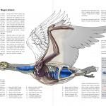 Editorial-Illustrationen zum Thema Vogelflug