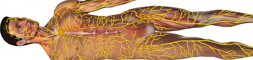 Schematische Darstellung des menschlichen Lymphsystems